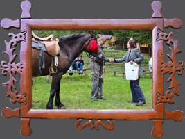 Навчання-семінар «Племконецентр»: Гуцульський кінь в культурі Карпат